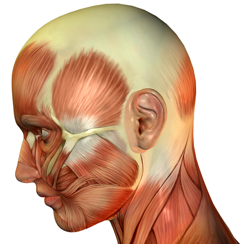 Physiotherapy And Tmj Jaw Pain West Fourth Physiotherapywest